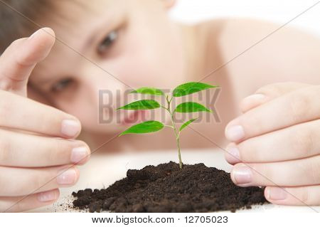 Young Plant -- Contest