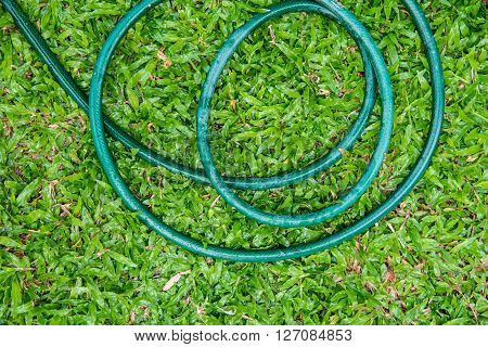Rubber Tube In The Garden.
