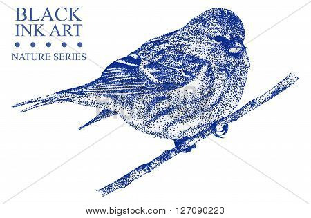 Illustration with bird Redpoll drawn by hand with black ink. Graphic drawing pointillism technique