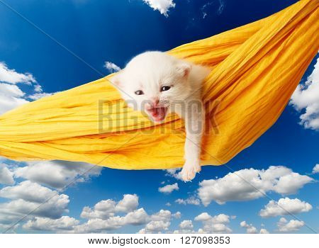 White kitten in a yellow hammock. Cute white kitten in a hammock having rest, growling, isolated at blue sky. Adorable pet. Small heartwarming kitten. Little cat. Animal isolated. High key