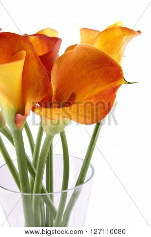 Close-up of a bouquet of calla lilies in a glass vase. Isolated on white background