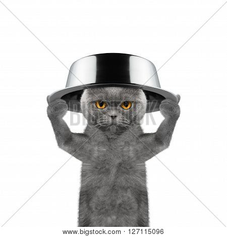Cat with a bowl on his head is going to eat -- isolated on white