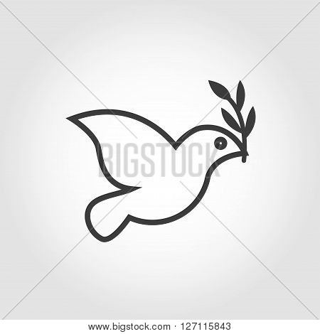 Vector white dove icon on grey background. Peace dove with olive branch. Dove outline thin symbol.