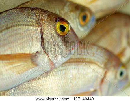 Background of Perfect Raw Sea Bream closeup on Fish Market Table. Focus on Fish Eye