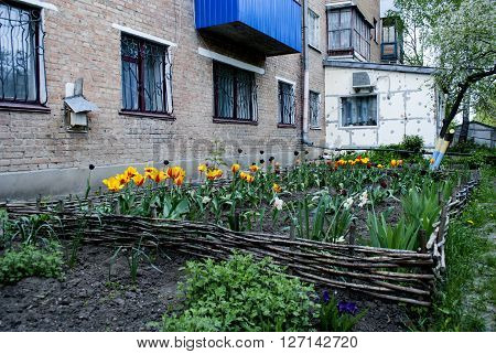 flowers tulips green grass house windows with grilles