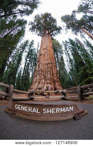 General Sherman tree in Sequoia National Park