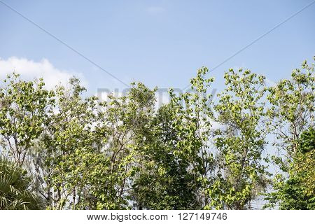 Day nature tree with cloud blue sky