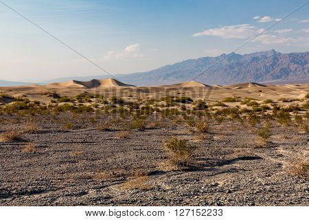 Mesquite Flat Sand Dunes in Death Valley NP