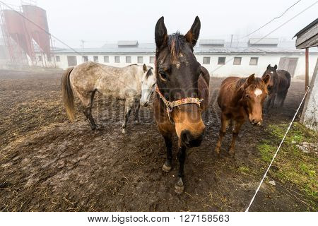 View of horses in a farm in Slovakia