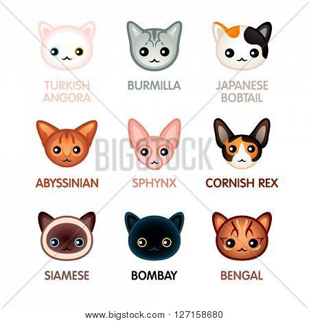 Kawaii cat breed head icons