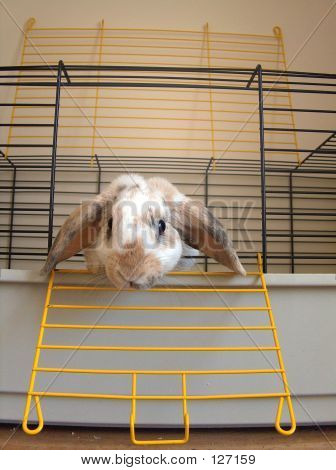Bunny Looking Out Of Cage