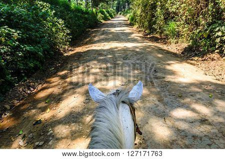View of horse from horseback looking along trail in woodland