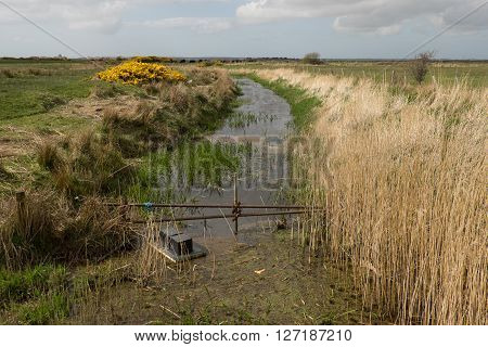 A floating mink trap attached to a metal railing in a waterway banked with tall grasses.