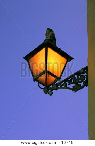 image of a dove on top of street lamp in old san juan early in the morning poster