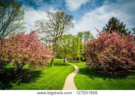 Walkway And Spring Color At Johns Hopkins At Mount Washington, In Baltimore, Maryland.