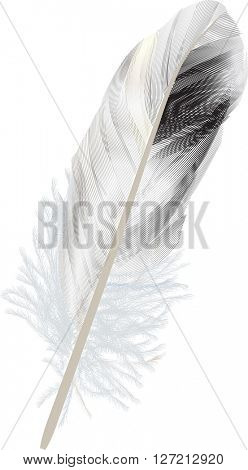 illustration with fluffy feather isolated on white background