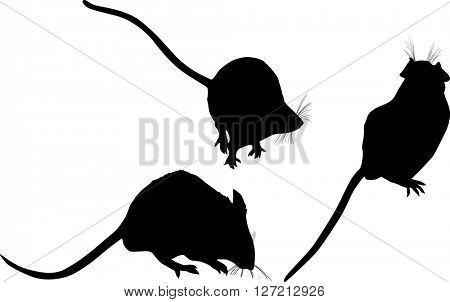 illustration with set of mouses isolated on white background