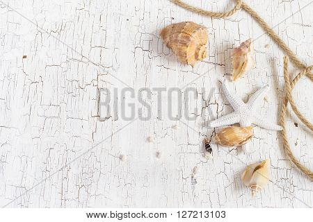 Starfish seashells and rope on a white background space for text