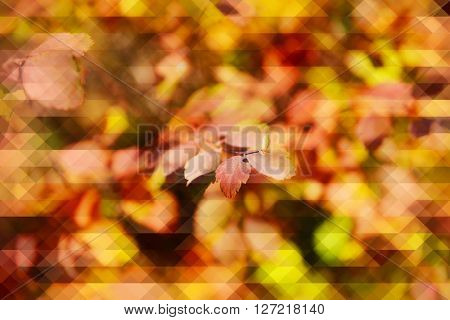 Beautiful yellow autumn leaves, abstract background