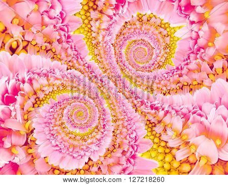 Spiral background made of chrysanthemum flowers