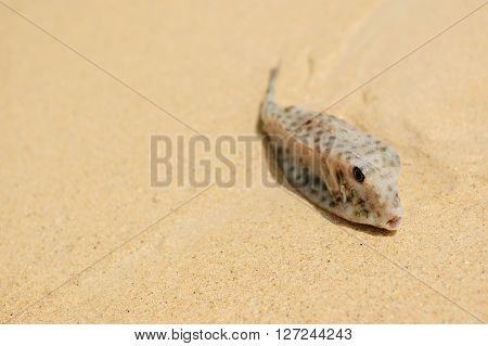 A fish drawn in the sand . thai