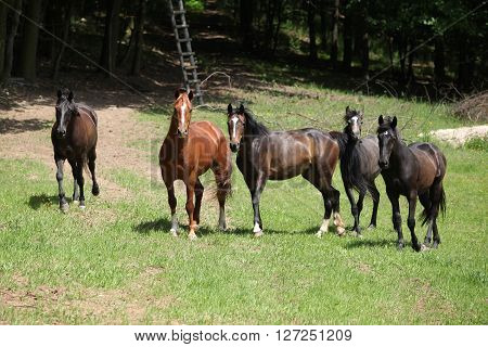 Nice Herd Of Horses Together On Pasturage