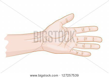man hand isolated on white vector illustration