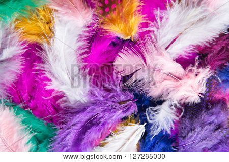 Colored different Feathers background pattern., close-up.
