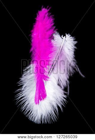 Colored Feathers isolated on black background, close-up.