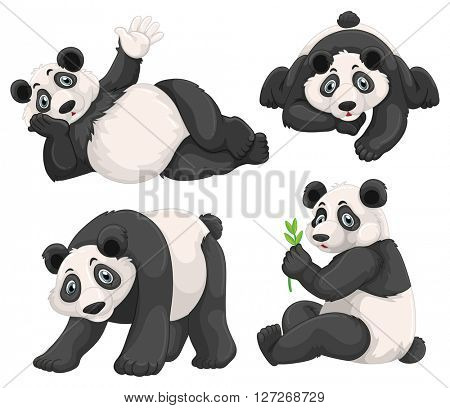 Panda in four different poses illustration