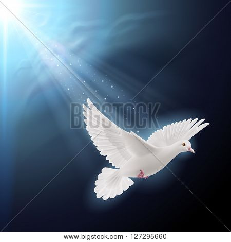 White dove flying in sunlight against dark blue sky as symbol of peace