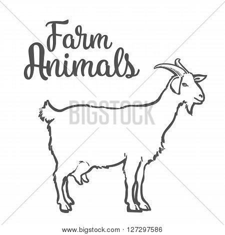 Farm pet goat sketch drawn by hand, cattle, milk and goat meat, goat meat, one farm horned animal on a white background, vector illustration livestock - goats. poster