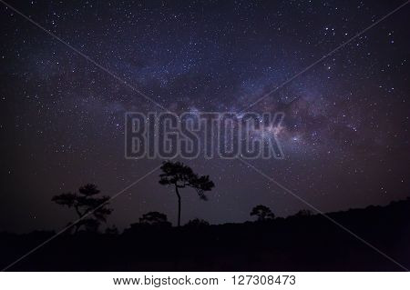 Silhouette Of Pine Tree And Milky Way.long Exposure Photograph.with Grain