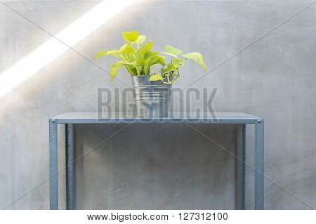 loft style zinc pot and shelf planting with vine or pothos plant. idea for little garden with small space house addition a green for fresh . poster