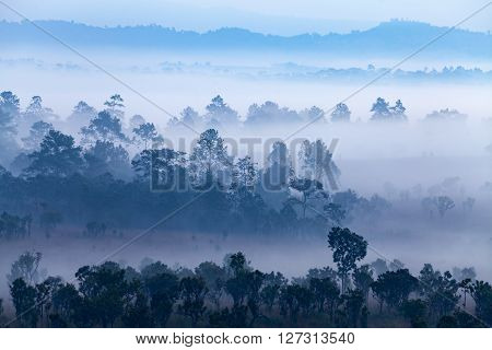Fog In Forest At Thung Salang Luang National Park Phetchabun,thailand.