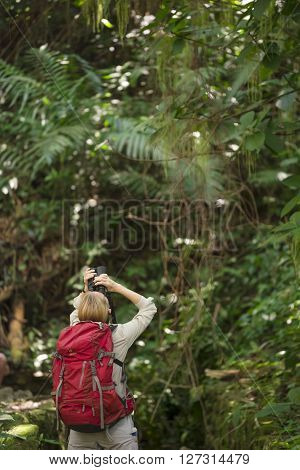 Tourist Hiker At Palenque Rainforest In Mexico