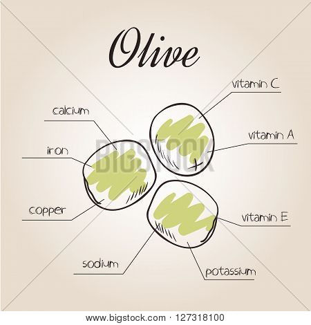 vector illustration of nutrients list for olive.