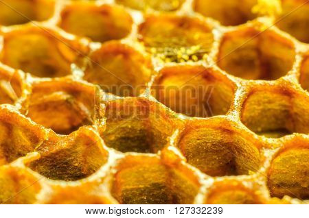 a honey comb macro as a background