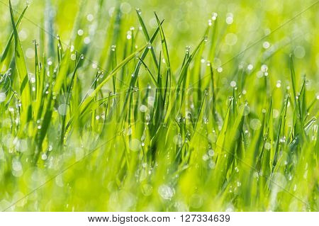 wet grass on a blurred background meadow, dew glistening with sunlight, bokeh