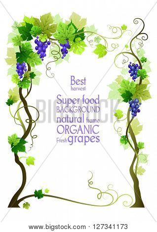 Background with grape. The natural design banner,ticket, leaflet and so on. Place for text. Isolated elements.