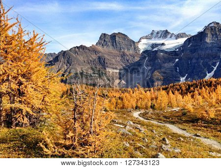 Picture of the yellow larches in Fall,at Valley of the ten peaks in Banff,Alberta,Canada. poster