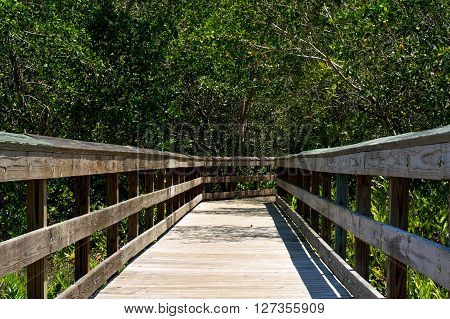 Low View Of Wooden Boardwalk In Florida