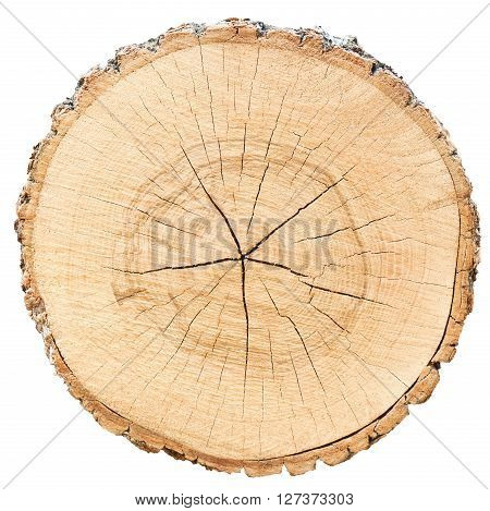 environment circle tree slice cross section of piece of wood