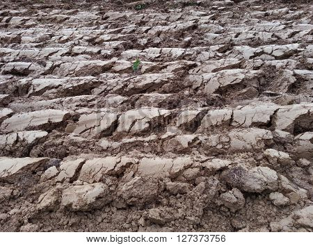 Plowed Cultivated Loam Soil Field