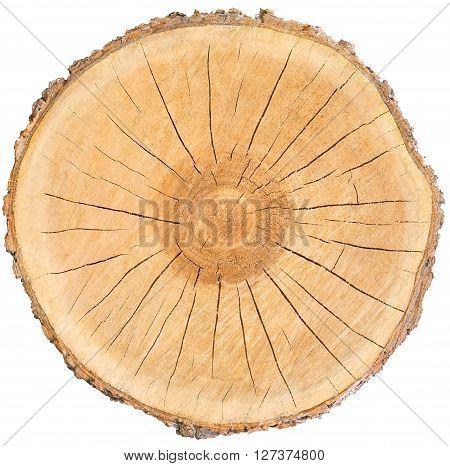 Piece of radiating warm wood circle with bark cracks rings