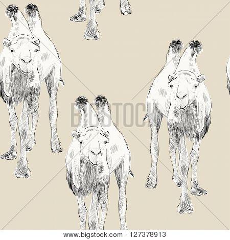 sketch of Bactrian camel on beige background