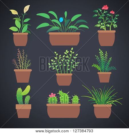 House plants, flowers in pots. Vector home flowers in pots with green leaves