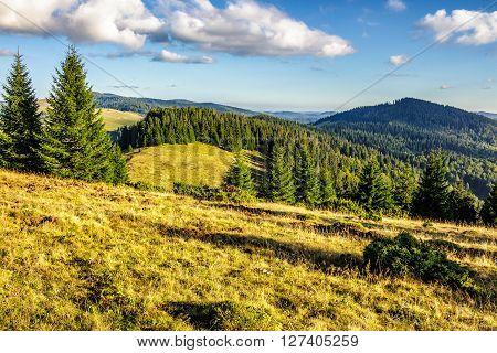 coniferous forest on a steep mountain hillside