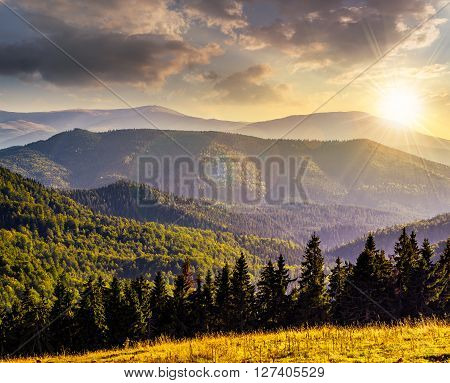 coniferous forest on a steep mountain in evening light