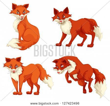 Four foxes in different poses illustration